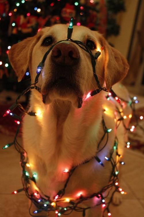 christmas lights | Tumblr discovered by Sofia Maddalena
