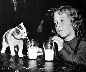 cat, milk, and black and white image