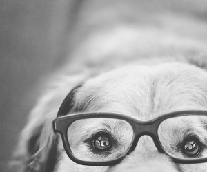 dog, black and white, and glasses image