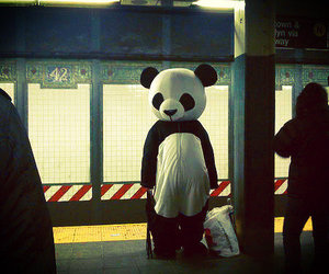 panda and alone image