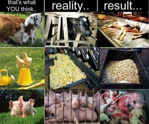 animals, truth, and hurt image