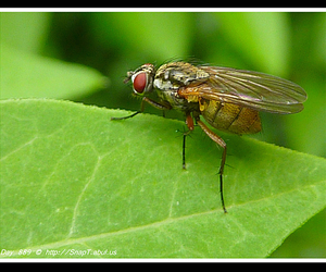 fly eye, compound eyes, and identification insect image