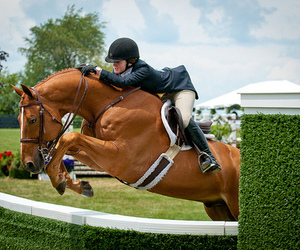 athlete, horse, and jump image