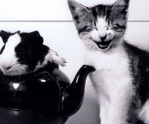 cat, teapot, and smile image