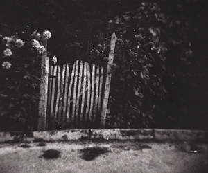 black and white, flowers, and gate image