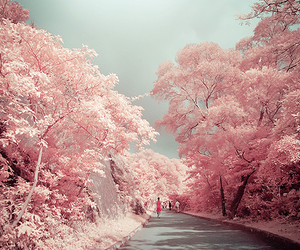 freedom, pink, and tree image