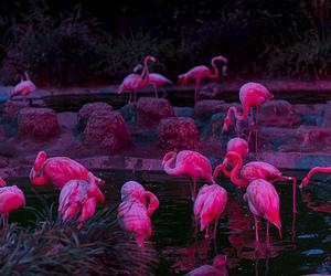pink, flamingo, and animal image