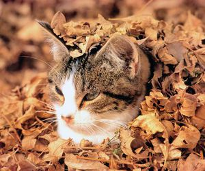 cat, leaves, and autumn image