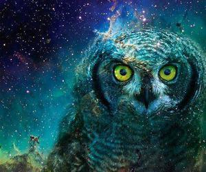 coruja and owl image