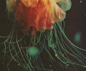jellyfish, ocean, and sea image