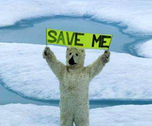animal, bear, and Save Me image