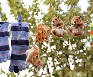 animal, hamster, and friends image