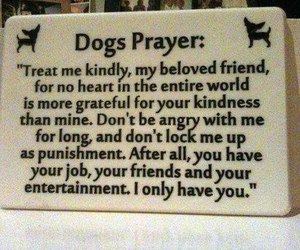 dog, pray, and text image