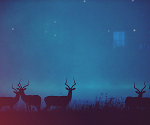 deer, animal, and night image