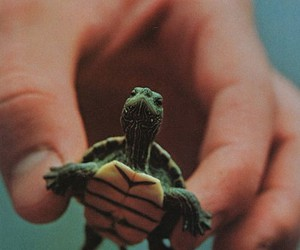 small and turtle image
