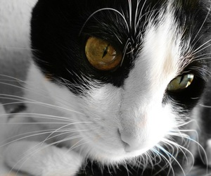 black and white, cat, and eyes image