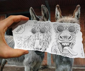 donkey and drawing vs photography image