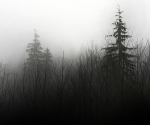 tree, forest, and black image