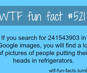 text, facts, and wtf fun fact image