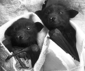 bats and puppy image
