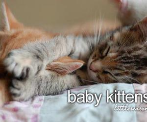 cat, baby, and kitten image