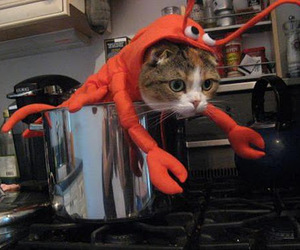 awesome, cat, and costume image