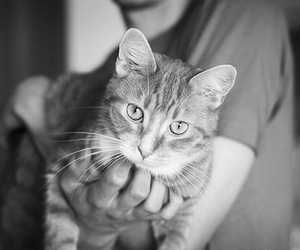 cat, photography, and animal image