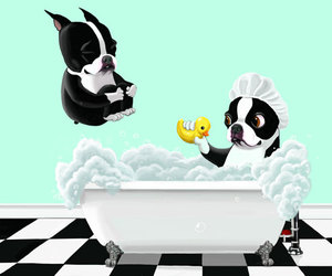 art, dog, and boston terrier image