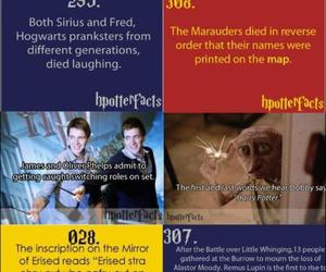 harry potter and harry potter facts image