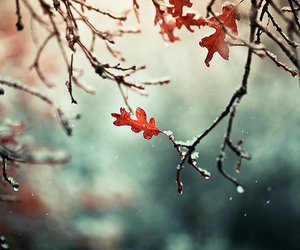 leaves, winter, and snow image