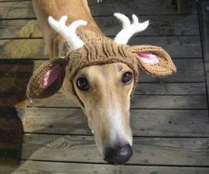 dog, christmas, and reindeer image