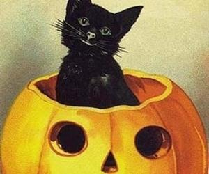 black cat, Halloween, and pumpkin image