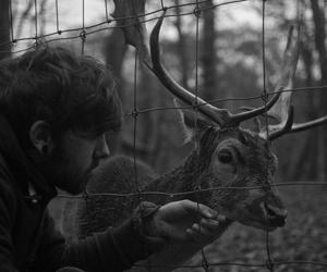 deer, boy, and animal image