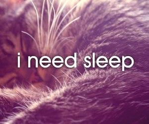 sleep, cat, and photo image
