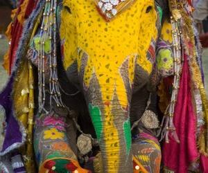 elephant and india image