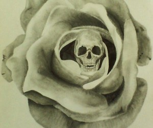 drawing, indie, and rose image