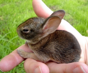 bunny, hand, and cute image