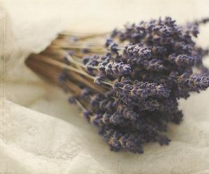 flowers, lavender, and vintage image