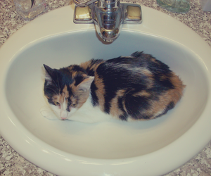 bathroom, cat, and kitty image