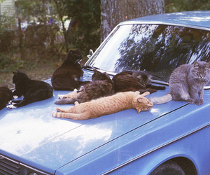 blue, car, and cats image