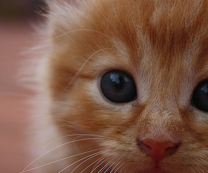 animal, ginger, and pet image