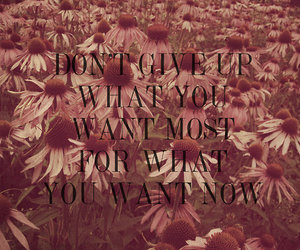 flowers, positive, and quote image