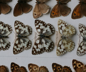 animals, dead, and butterfly image