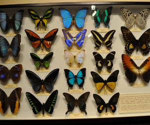 butterfly, florence, and taxidermy image