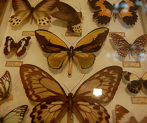 animal, artifacts, and entomology image