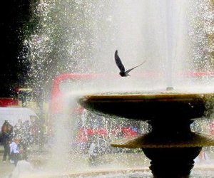 bird, london, and photography image