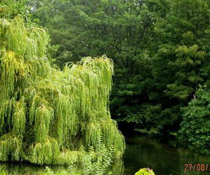 beautiful, photography, and green image