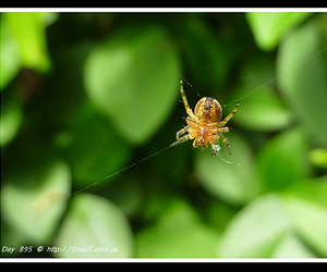 arachnid, macro close up, and adult spider image
