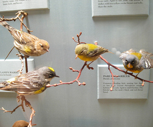 bird, dead, and taxidermy image