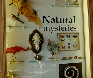 bird, cabinet, and collection image